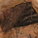 Закрытая Архимедом Шклевотная дыра
