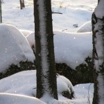 Зима вокруг нас