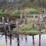 Остатки моста через р. Тосну в ур. Новая Деревня