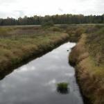 Река Тосна у д. Федосьино