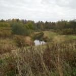 Река Тосна между деревнями Гришкино и Федосьино