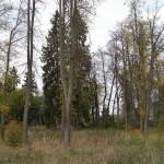 Остатки усадебного парка в д. Каменка