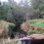 Речка Еглинка и остаки железнодорожного моста