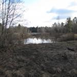 Разлившийся Попов ручей, левый приток Тосны