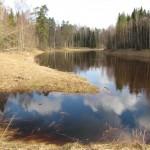Еще один весенний ручей впадает в Тосну