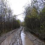 Дорога вдоль р. Тосны поcле д. Дубовик.