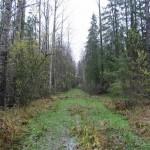 Старинная дорога в ур. Веретье от д. Дубовик.