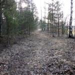 Старая дорога в лесу.