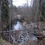 Бобровая плотина на Орлинке.
