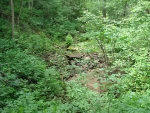 Сухое русло ручья Понырь.