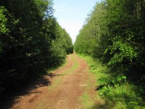 Дорога к Ярцевскому руднику.