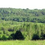 Долина реки Воложбы, вид с дороги.