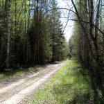 Сухой участок дороги перед д. Телицыно.