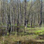 Разлившиеся ручьи.