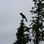 Неизвестная птица, которая очень любит гречку с тушенкой.